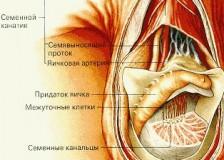 Диагностика урологических заболеваний на УЗИ мошонки