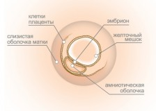 Информация о наличии плода на УЗИ на 3 неделе беременности