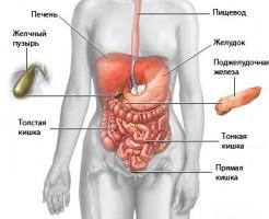 Процедура проведения УЗИ брюшной полости