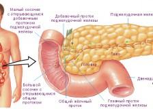 Рекомендации по прохождению УЗИ поджелудочной железы