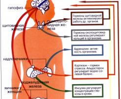 В каких случаях назначается анализ крови на гормоны?