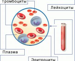 Какие показатели входят в общий анализ крови?