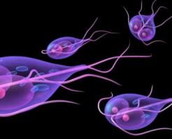 Наличие паразитов в организме по анализу крови на лямблии
