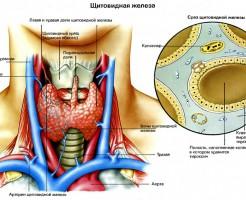 Показатели анализа крови на гормоны щитовидной железы