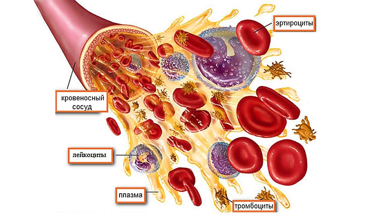 Частицы крови
