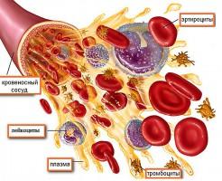 Показатели и расшифровка общего анализа крови у детей