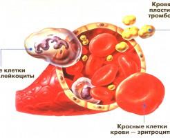 Виды и расшифровки анализов крови
