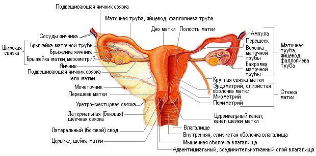 krasiviy-orgazm-vo-vremya-seksa