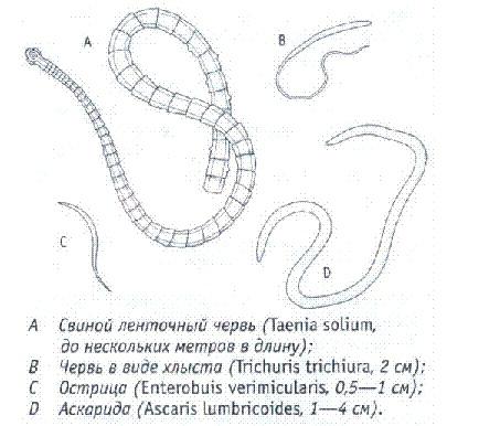 выявление паразитов в организме