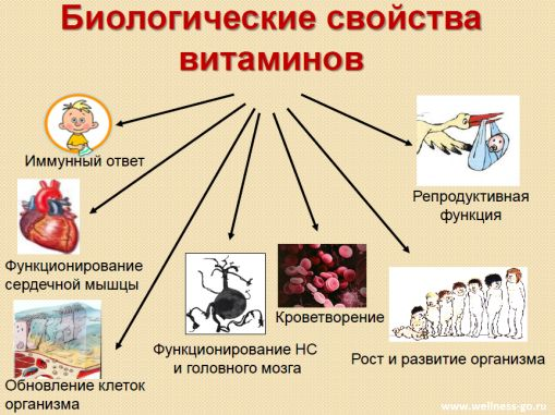 Биологические свойства витаминов