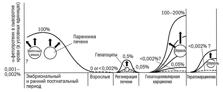 Динамика АФП в онтогенезе и канцерогенезе