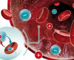 Биохимия и нормы общего анализа крови