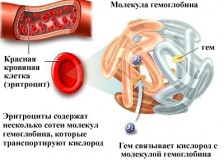 Обозначения и нормы общего анализа крови у детей