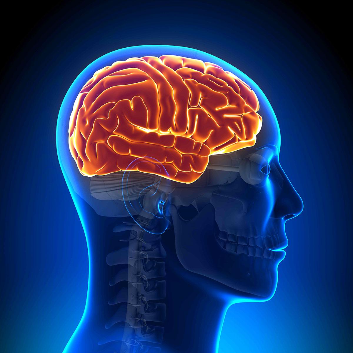 Мозг. Инструкция по применению 85
