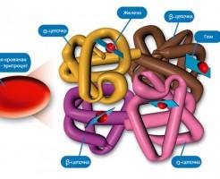 Свойства эритроцитов в исследовании на MCHC в анализе крови