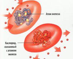 Функции и виды гемоглобина в организме человека