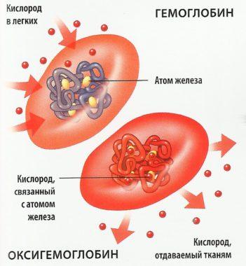 Что кушать чтобы поднять гемоглобин при беременности