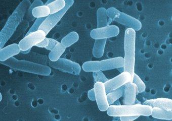Лактобактерии закисляют среду