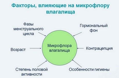 Факторы микрофлоры