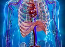 Процедура МРТ грудной клетки