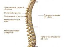 Причины болей в спине на МРТ позвоночника