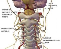 Выявление патологий на УЗИ шейного отдела позвоночника