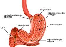 Точный диагноз при помощи МРТ желудка