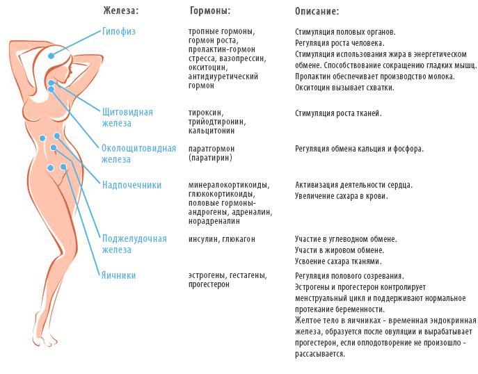 Фунции гормонов в организме