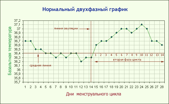 Зависимость базальной температуры от цикла