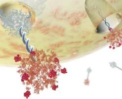 Значение СА-125 в анализе крови