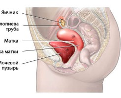 Распознавание отклонений и патологий на УЗИ органов малого таза