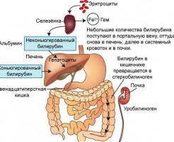 О чем говорит билирубин в анализе крови?