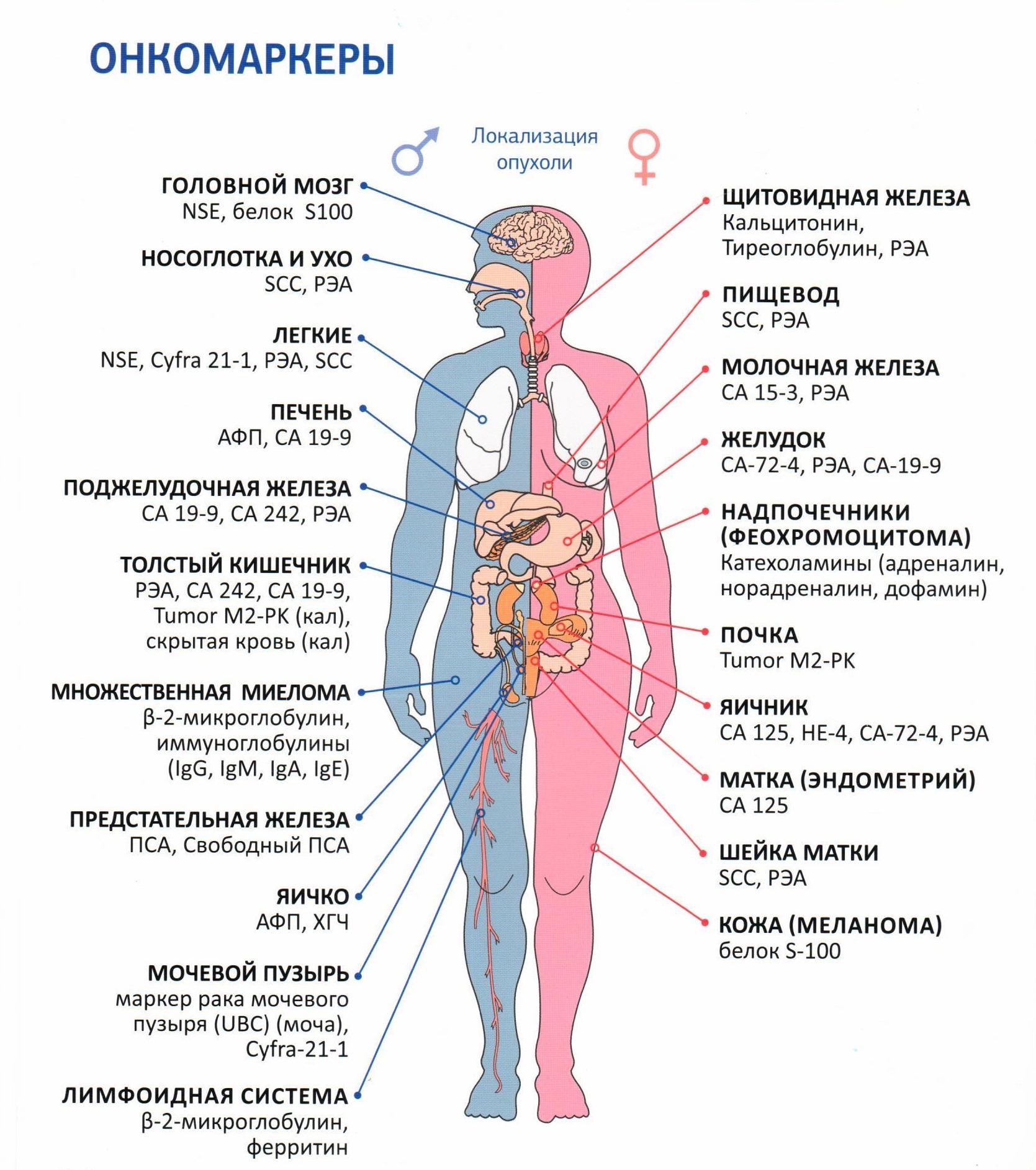 Схема онкомаркеров