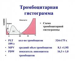 Объем тромбоцитов в расшифровке MPV в анализе крови