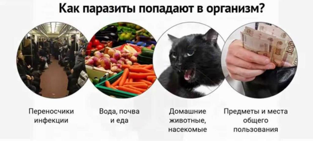 Попадание паразитов в организм