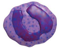 Отклонения и нормы базофилов в крови