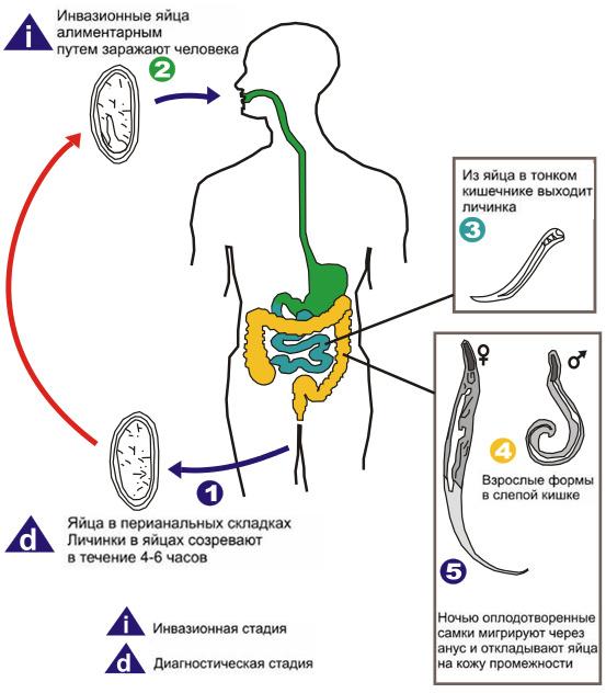 Заражение организма паразитами