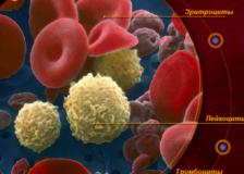 Факторы, при которых тромбоциты повышены в крови у женщин