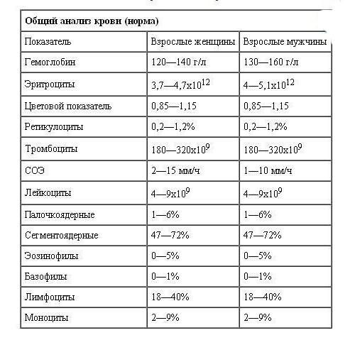 Общий анализ крови в норме