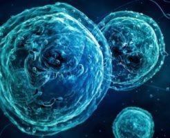 Виды и функции гранулоцитов в крови