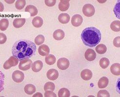 Почему базофилы повышены в крови?