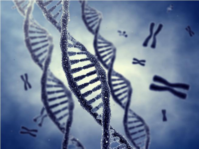 Главный предмет изучения - набор хромосом