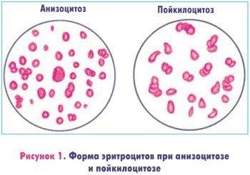 Клетки эритроцитов