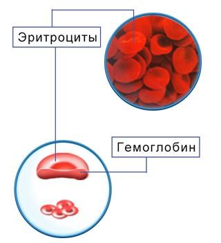 Средняя концентрация гемоглобина понижена что это значит
