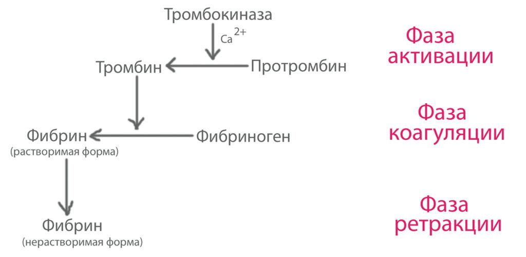 Схема процесса образования тромба