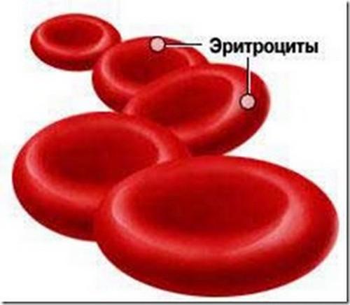 Эритроциты в моче эритроциты при беременности
