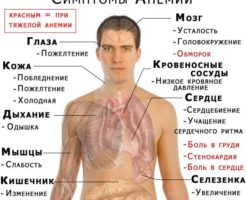 Возрастные нормы гемоглобина у мужчин