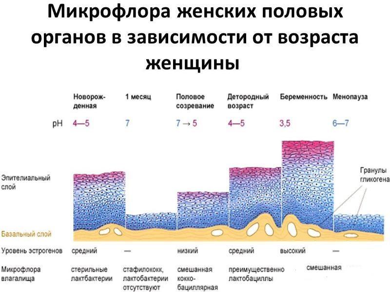 Возрастная микрофлора у женщин