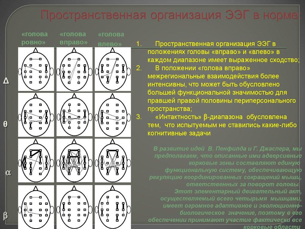Как расшифровать результаты ЭЭГ фото